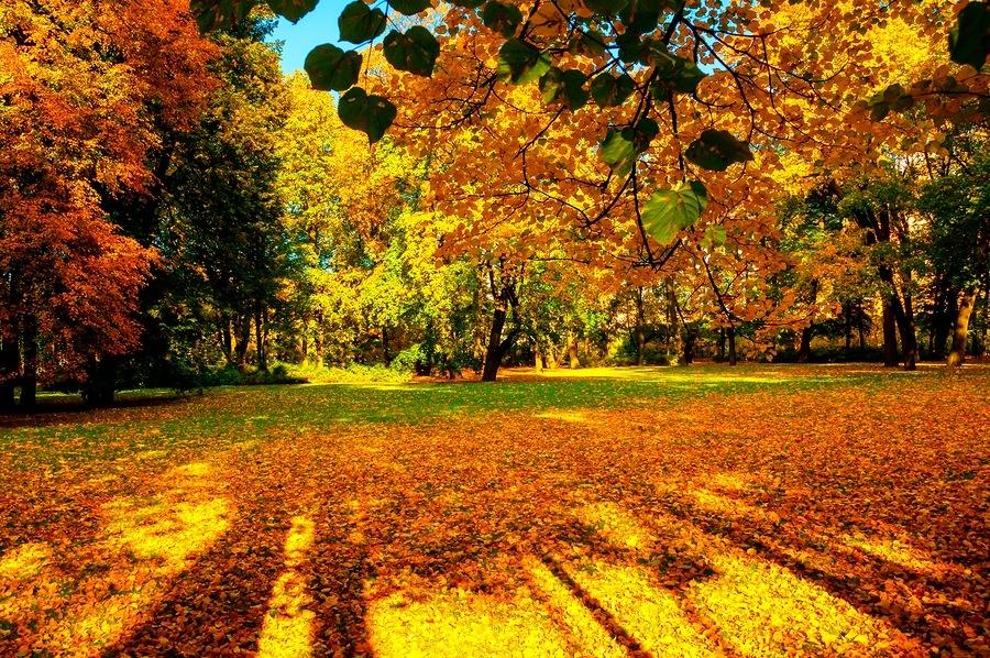 Citas motivacionales para el otoño